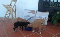 La Policía de Salobreña rescata a cuatro cachorros abandonados en el margen del río