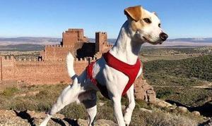 Pipper, el primer perro turista, llega a Almería