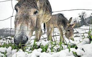 ¿A qué se debe el odio de los burros al mal tiempo?