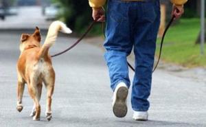 La Guardia Civil advierte de la regla de los 5 segundos que puede salvarle la vida a tu perro
