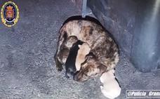 Rescatan a una perra y sus cachorros de un contenedor de basura en Granada