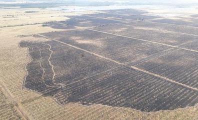 El Infoca da por extinguido el incendio declarado el lunes en un paraje de Almonte cercano a Doñana