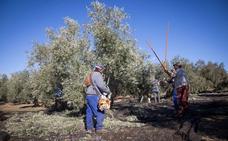 Cooperativas de Granada piden activar el almacenamiento privado de aceite