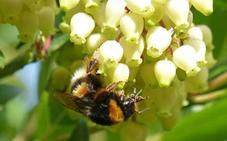 La miel de madroño inhibe la proliferación celular en líneas de cáncer de colon, según un estudio