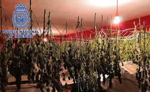 Utilizaba su vivienda en Almería para el cultivo de marihuana
