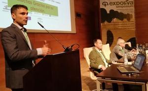 Científicos alertan de que el olivar tradicional soporta sobrecostes que amenazan su supervivencia