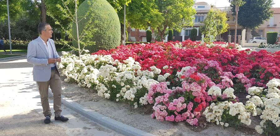 1.500 geranios rojos y varios cientos de rosales alegran La Alameda