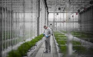 La compañía que cultiva el cannabis medicinal llega a la península