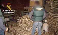 Siete detenidos y 16 investigados por tráfico ilegal de cuernos