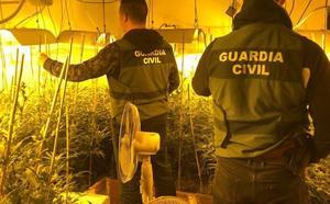 Desmantelan otra 'fábrica' de marihuana con 774 plantas en Lopera