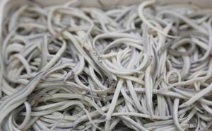 Interceptan en Barajas angulas robadas en Irún que iban a ser exportadas ilegalmente a Asia