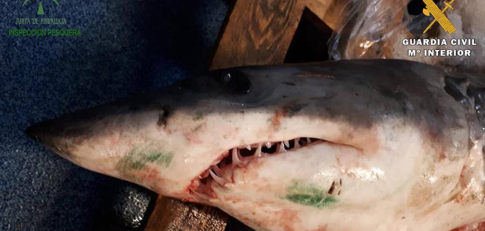 Intervienen en Guarromán una tonelada de pescado no apto para el consumo