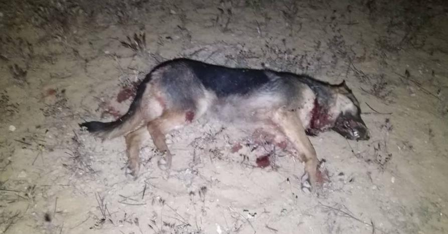 La Guardia Civil investiga la muerte a tiros de al menos un pastor alemán en La Higuera