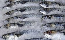 Los expertos advierten sobre cuatro pescados que contienen altos niveles de mercurio