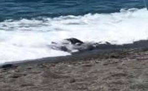 Investigan la aparición de un cadáver en la orilla de la playa de El Tesorillo de Almuñécar