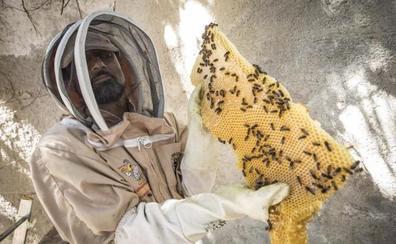 Rescatan 100.000 abejas en un edificio del Albaicín de Granada