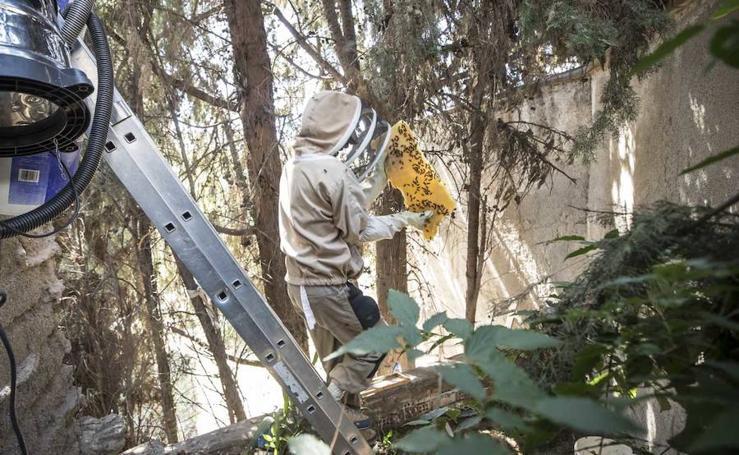 Extraen 100.000 abejas de un muro del Albaicín
