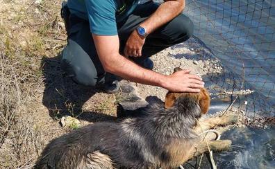 Rescatan un pastor alemán que cayó a una balsa en Tabernas
