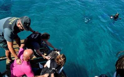 La tortuga boba Guerrero vuelve al mar tras tres meses de recuperación en tierra