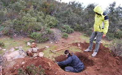 Un equipo de geógrafos determina que el pino resinero habita de manera natural sobre las peridotitas de Sierra Bermeja