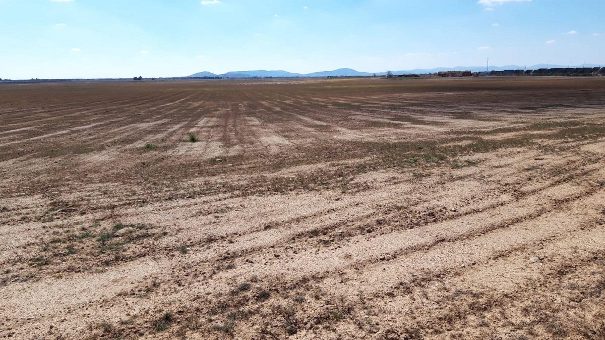 Descenso del 30% en el cereal de secano por la falta de lluvias