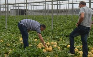 Almería ofrece máxima calidad en melón y sandía a los consumidores