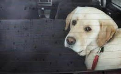 La Policía Nacional alerta del bulo de los perros encerrados en los coches
