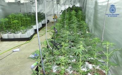 Un detenido por una plantación de marihuana en Andújar
