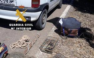 Investigado un vecino de La Carolina por capturar aves prohibidas