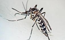 Tres turistas, infectados de Chikungunya durante unas vacaciones en España