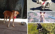 Una protectora de animales de Órgiva denuncia el robo de cuatro perros