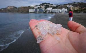 Almuñécar refuerza la limpieza de las playas para eliminar las salpas