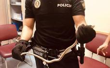 Susto por la aparición de una serpiente en la zona comercial del centro de Jaén