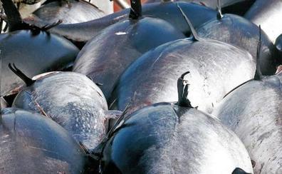 Nueve arrestos por la pesca ilegal de 1.800 kilos de atún rojo en Almería