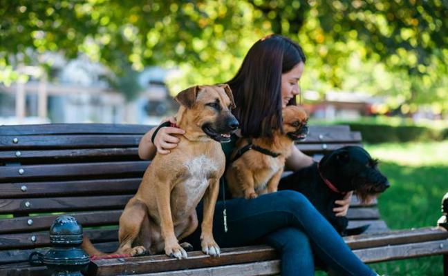 3 opciones para dejar a tu perro bien cuidado mientras disfrutas de tus vacaciones