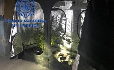 Dos niños de ocho y doce años vendían la marihuana que cultivaban sus padres en tres laboratorios