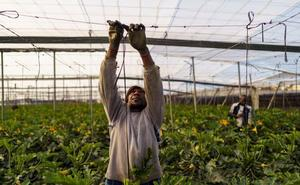 Desciende casi un 4% los afiliados extranjeros a la Seguridad Social en Almería en mayo