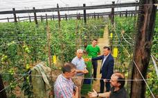 Cajamar crea un Plan Renove exclusivo para modernizar invernaderos de Granada