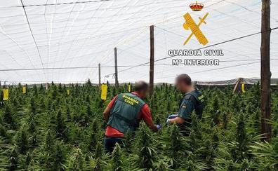 Detenidos dos jóvenes en El Ejido con 1.400 plantas de marihuana y armas listas para disparar