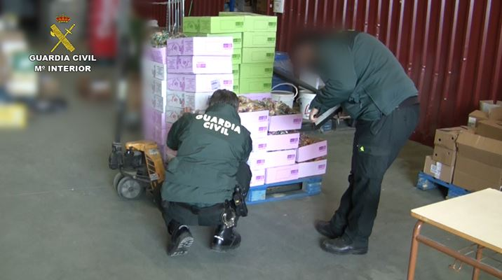Varias detenciones en una empresa de Granada que vendía como ecológicos toneladas de pepino convencional