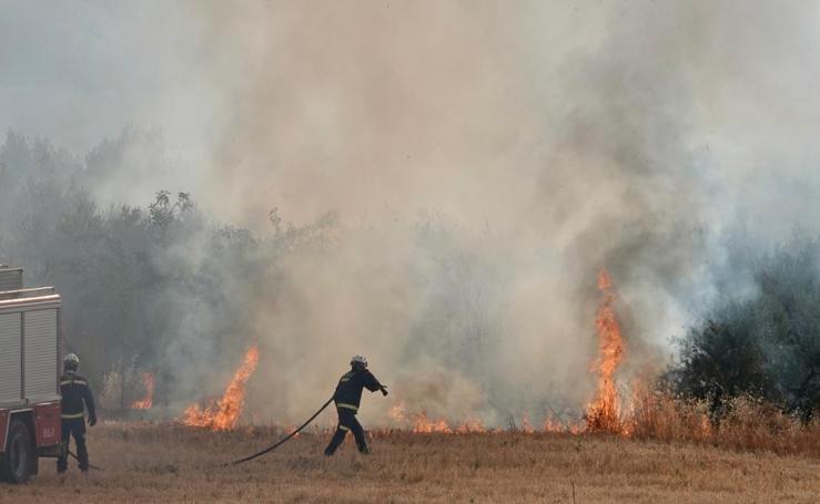 Arde un campo de cañaverales en Pulianas