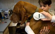 Alerta de los veterinarios: el plan de vacunación de la rabia es insuficiente