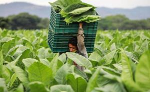 El negocio que Nicaragua le 'arrebató' a Cuba