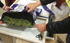 Desmantelan un cultivo de más de 1.200 plantas de marihuana escondido entre olivos en Otura