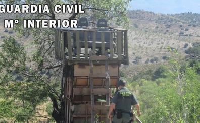 La Guardia Civil interviene una jaula trampa para capturar grandes especímenes en Abrucena