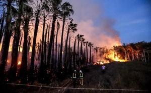 Absuelto el acusado de prender fuego a palmeras valoradas en 100.000 euros en Motril