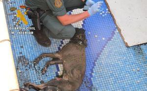 Investigada por dejar morir de hambre y sed a su perro en Vegas del Genil