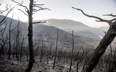La recuperación de Lújar, a medio camino cuatro años después del gran incendio