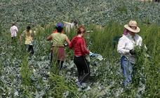 La Junta elabora una ley para avanzar en la igualdad de las mujeres en el medio rural y pesquero
