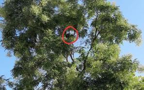 Así salvaron tres policías locales de Granada a un gato atrapado en un árbol durante dos días